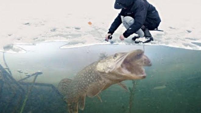 Ужас эти ребята сняли на камеру подводный мир реки «Припять» в Чернобыле