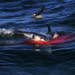 Это существо вынырнуло из глубин и проглотило акулу на глазах рыбаков! Шок
