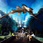Самый большой океанариум в Юго-Восточной Азии Бангкок