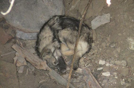 Пес неподвижно лежал несколько дней возле подвала. Люди проходили мимо…