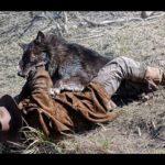 Матерый волк подкрался к бывшему военному, финал шокировал всех