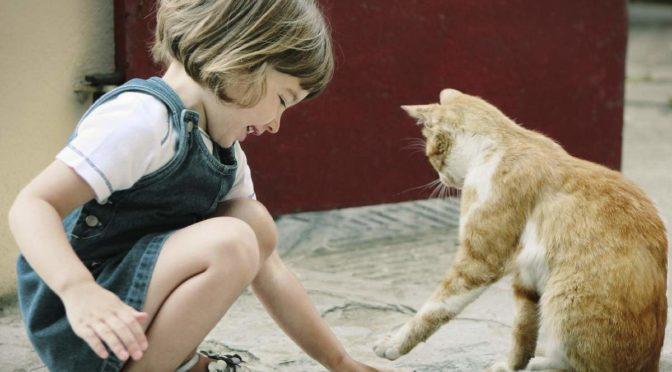 За девочкой бежала кошка и кричала желая что-то сказать ей, но не смогла