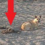 Люди нашли пса посреди поля. Когда  увидели, что он там охранял, ужаснулись