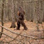Охотник убегая от снежного человека успел заснять его на камеру