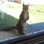 Белка постоянно стучала в окно дома! Через 8 лет семья поняла в чем дело