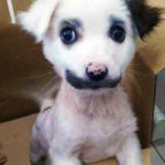 Семья приютила бездомного щенка но он оказался хищником