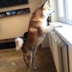 Испугавшись взрывов фейерверков, пес выпрыгнул с 11 этажа и упал на женщину