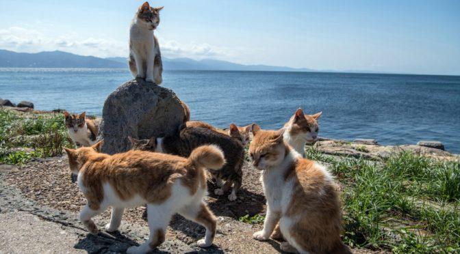 В 1875 кот и кошка убежали с корабля на остров теперь там одни кошачьи стаи