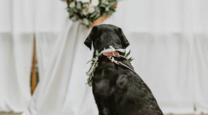Лабрадор на свадьбе шокировал гостей. Невеста с женихом потеряли дар речи!