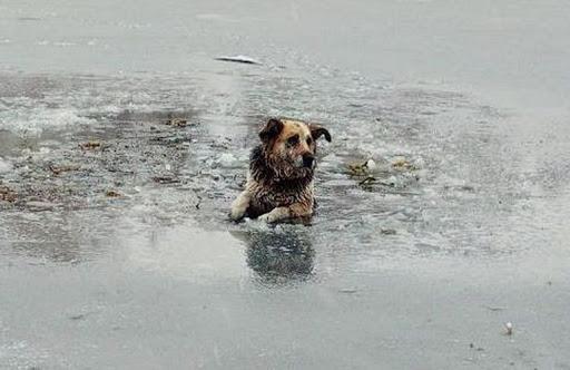 Собака провалилась под тонкий лед. Прохожий мужчина шокировал реакцией…