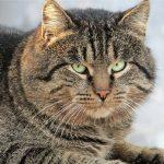 Видео: кот с характером против стаи из шести собак
