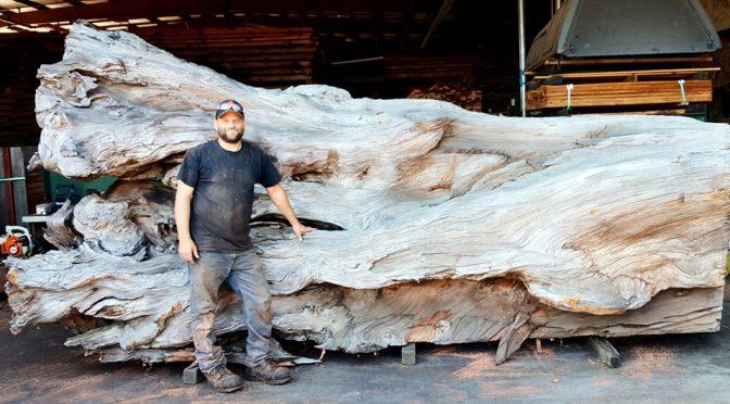 Старое дерево рухнуло на тротуар: вот что с ним сделал мужчина…