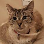 Кот ушел погулять: когда вернулся, хозяева обомлели