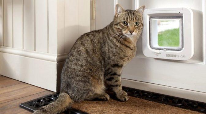 Бездомная кошка попросилась в квартиру. Утром люди широко открыли глаза