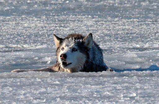 Волк умолял его спасти: увидев такое, мужчина не поверил своим глазам