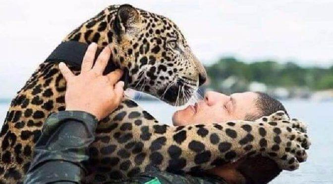Ягуар тонул в потоке воды, внезапно он увидел рядом человека