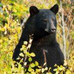 Трехлетний малыш заблудился в лесу, и его спас медведь