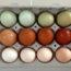 Чем же отличаются белые яйца от коричневых, вы удивитесь