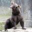 Насилие медведя над мужчиной длилось месяц. Вот как пострадавший выглядит